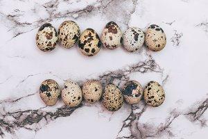 two rows of quail eggs