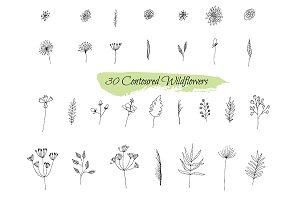 №241 Collection sketches plants.