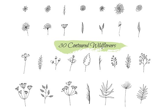 Ўн241 Collection Sketches Plants