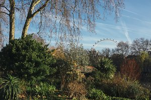 The London eye from St James Park