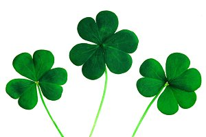 Close-up photo of 3 clovers