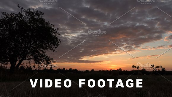 Sunset Over The Tree And Flowers Slider Shot Time-lapse
