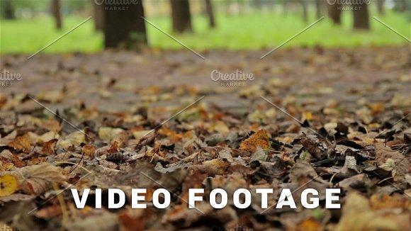 Fallen Foliage Autumn Close Up Horizontal Slider Shot