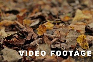 Fallen foliage, autumn. Close up, horizontal slider shot