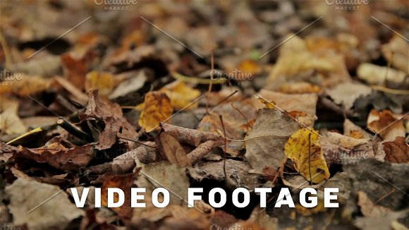 Fallen Foliage Autumn Close Up Horizontal Slider Shot