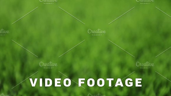 Unfocused Green Background Slider Shot
