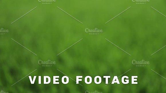 Unfocused Green Background Slider Shot