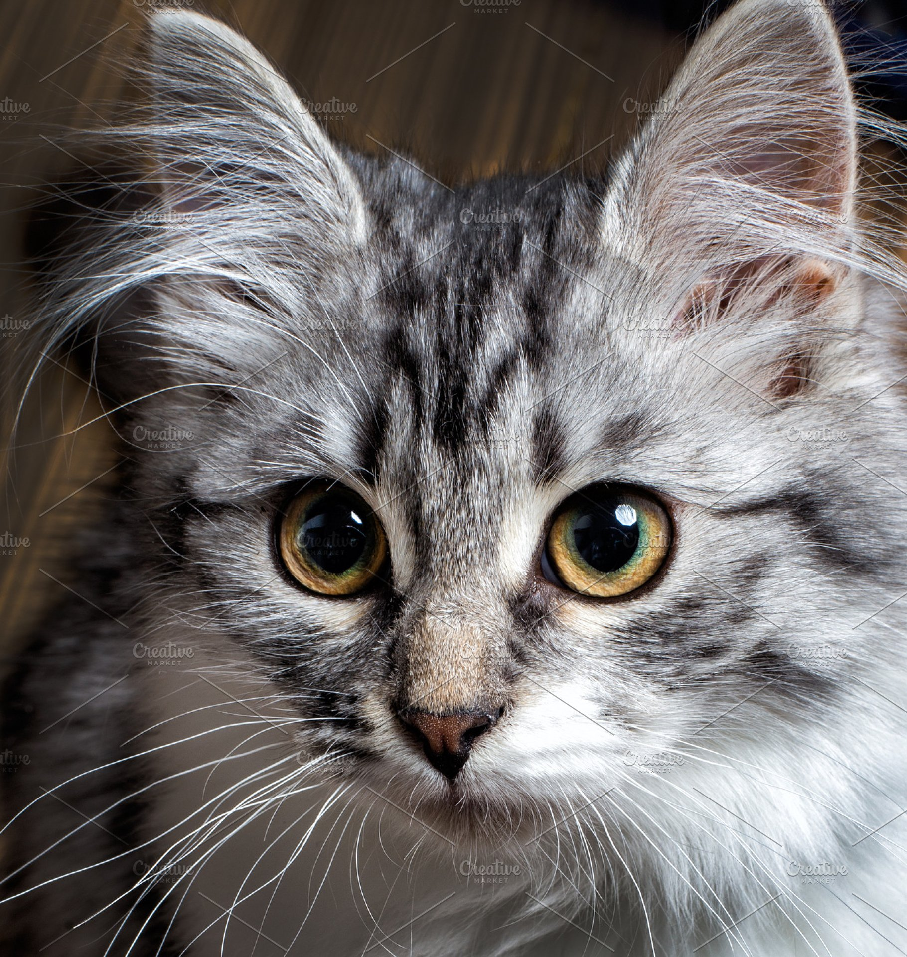 grey Cat with yellow eyes | High-Quality Animal Stock ...