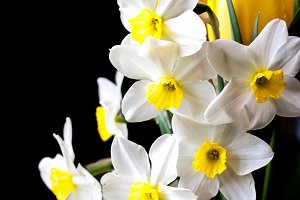 white springtime daffodil flower