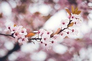 fresh pink flowers