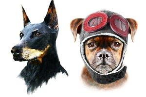 Dog illustration/Doberman print