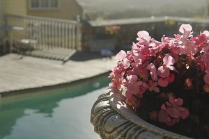 pink flowers on the background of the pool and houses, South Africa, selective focus