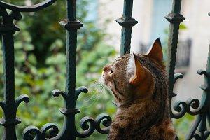 Cat on a Balcony