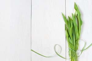 White background with buds of tulips
