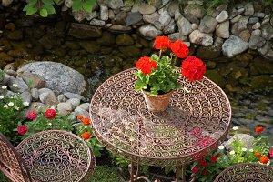 Geranium on table