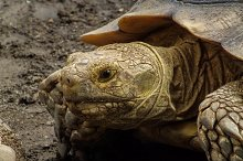 An Old Turtle