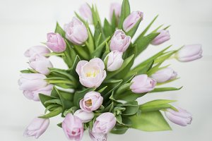 Bouquet of light pink tulips