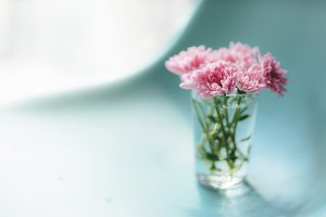 Pink flowers on the table