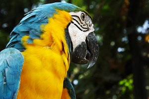 Colorful Parrot Bird