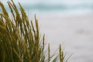 Beach Grass - Portrait