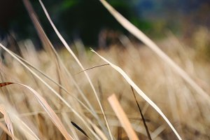 Dry grasses at a mountain