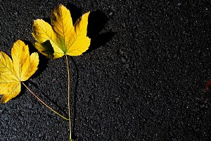 Yellow leaves on a black background