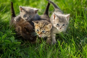 Little tabby kittens on green grass