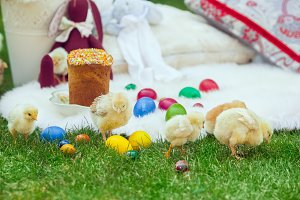 Baby chicken and ester eggs in the grass