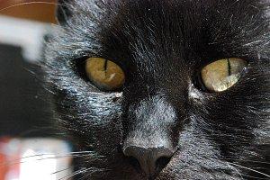 The cat stare.