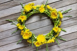 Wreath of dandelion fresh flowers