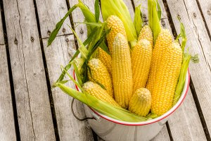 Bucket of fresh yellow corn