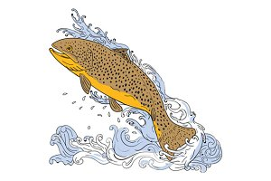 Brown Trout Swimming Up Turbulent