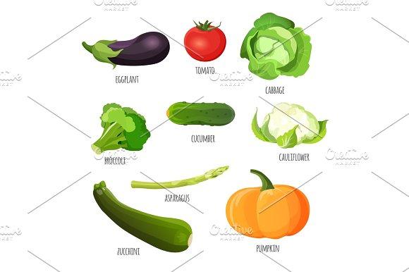 Vegetables Set Eggplant Tomato Cabbage Broccoli Cucumber Cauliflower Pumpkin Zucchini