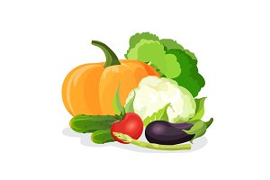 Vegetables vector set. Eggplant, tomato, cabbage, broccoli, cucumber, cauliflower, pumpkin,