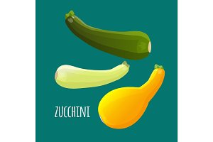 Zucchini or courgette vegetables set. Different kinds of summer squash