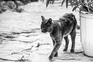 Greek Cat on the street, black and white photo