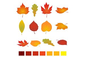 Isolated autumn leaves. Flat vector illustration. Isolated on white background. simple cartoon flat style, vector illustration