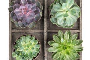 Succulent plants Floral flat lay
