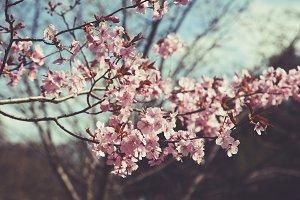 iseeyouphoto spring blossom pink