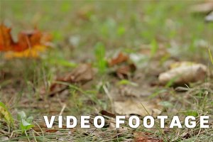 Noname Mushroom. Autumn. Close up, Slider shot