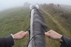 First person view of riding a horse. Point of view of rider walking at stallion at nature. Pov motion. Close up