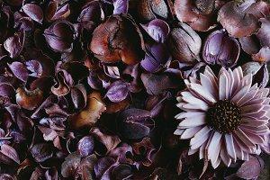 2 images puple floral pattern