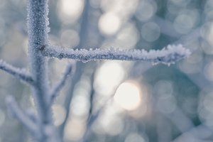 ice crystals on a branch