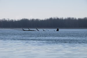 Loch Ness on Drava River