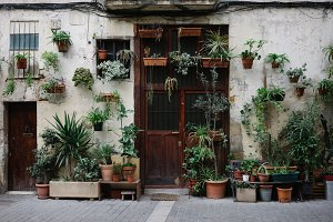 Plants in pots on facade