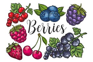 Berry hand drawn set, patterns