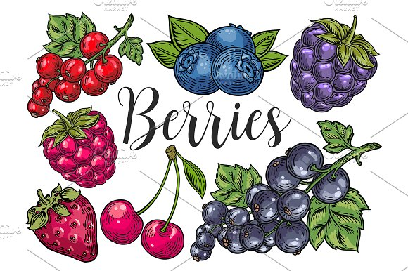 Berry hand drawn set, patterns in Illustrations