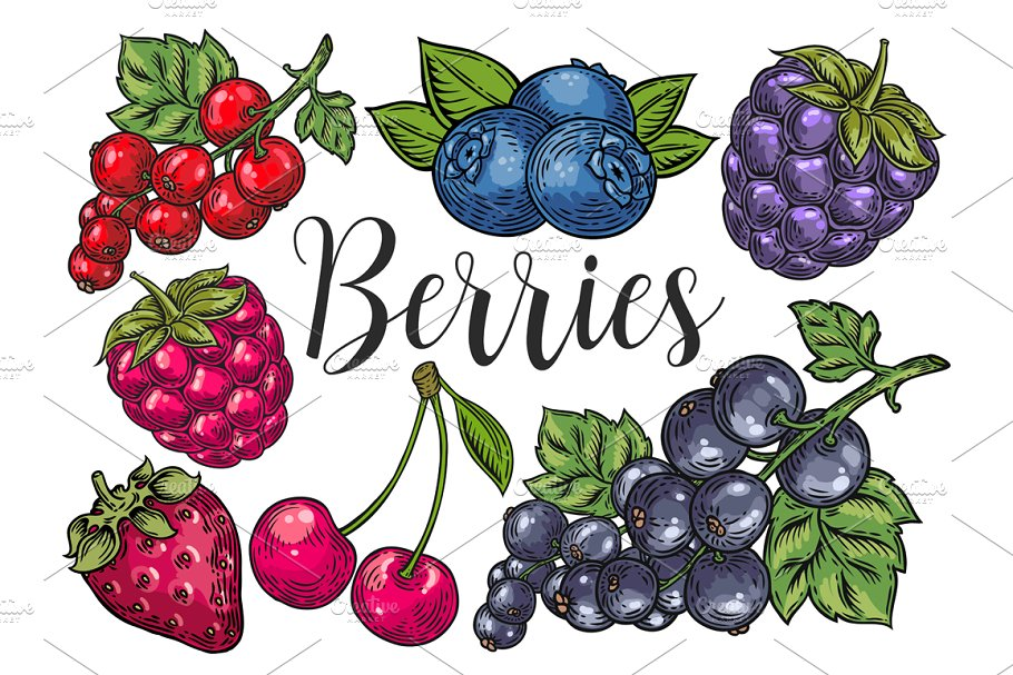 Berry hand drawn set, patterns in Illustrations - product preview 8