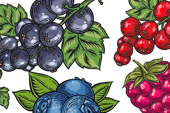 Berry hand drawn set, patterns in Illustrations - product preview 2