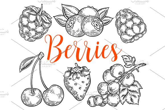 Berry hand drawn set, patterns in Illustrations - product preview 4